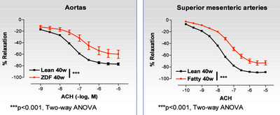 Figure 2: Comparison of endothelium-dependent relaxations in ZDF and in their control (Lean) obtained in in vitro experiments performed in aortic and superior mesenteric artery rings. (2-way ANOVA, ***P<0.001) (Pelvipharm, internal data).