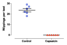 Figure 1: Number of eye wipes following the instillation of a single drop of 100 µg/ml capsaicin solution/vehicle in animals from SCI (spinal cord injured) and capsaicin desentized SCI rats (Pelvipharm, internal data).