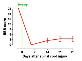 Figure 1: Locomotor recovery monitored with the BBB-open-field locomotor score after spinal cord injury (Pelvipharm, internal data).