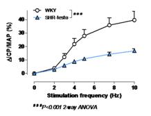 Figure 1: In vivo evidence of erectile dysfunction in testosterone-supplemented SHR. (Pelvipharm, internal data)