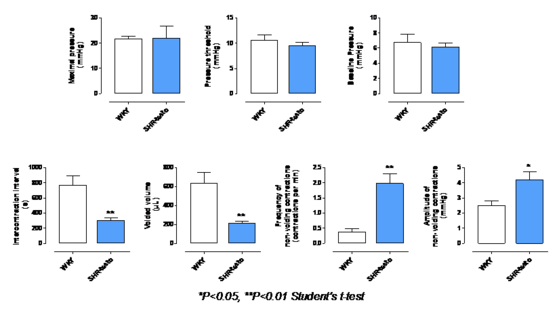 Figure 2: Urodynamic parameters in WKY and SHR supplemented with testosterone (SHR-testo) measured in conscious rats after a 3-week testosterone supplementation period (Pelvipharm internal data).
